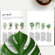 Peppermint38-greenthumb