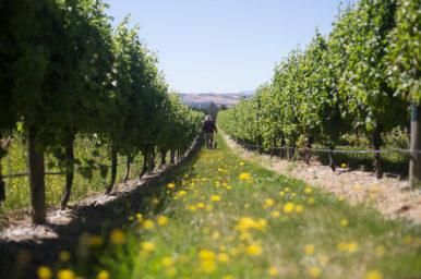 Yealands giveaway Sauvignon Blanc day
