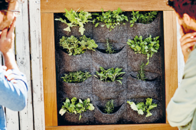 Peppermint make your own DIY garden wall planter