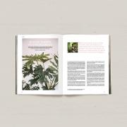 pm41-plants